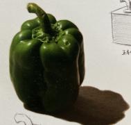 素描入门课,静物单体青椒画法步骤图素材55张,在家就能学画画!
