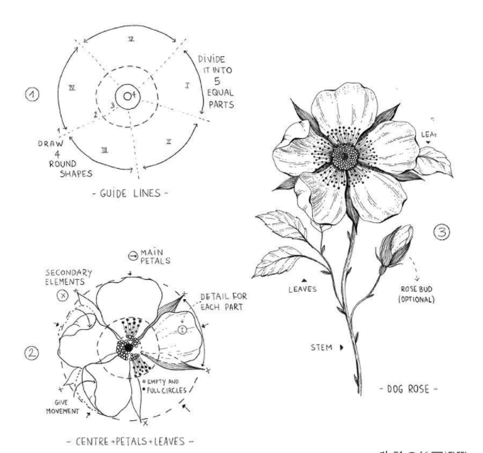 花卉绘画教程:画花卉不会造型?来看看老师是怎么画的!