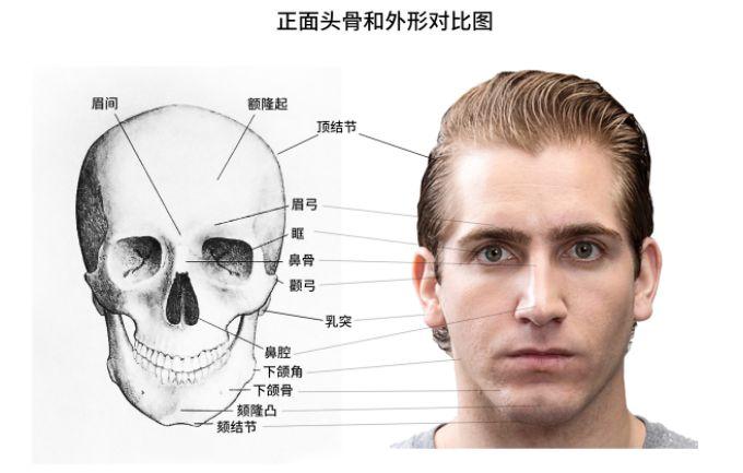 头骨结构画法详解,美术生的痛苦面具!