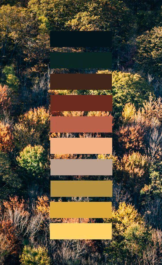 美术教程:还在为色彩上色烦恼吗?一步步教你如何上色!