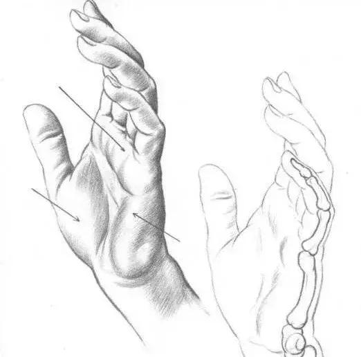 新手入门简单素描教程,非常适合小白临摹学习!