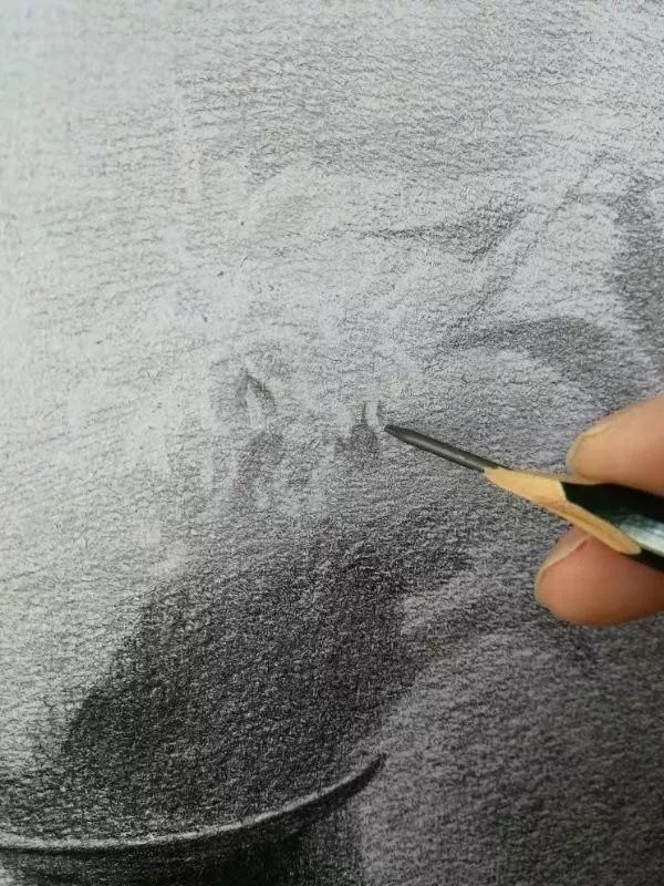 素描菊花怎么画?素描菊花画法步骤来啦!