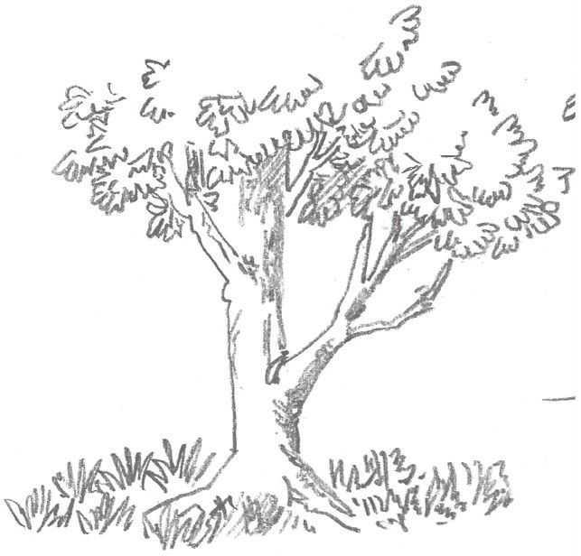 树木写生速写画法教程,分步骤讲解树的刻画,值得收藏!