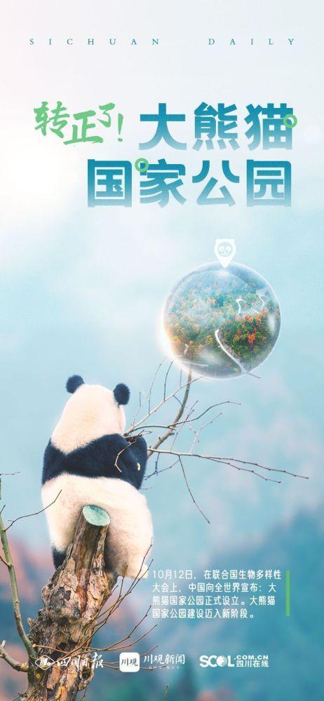 大熊猫国家公园正式设立!人退猫进格局形成!